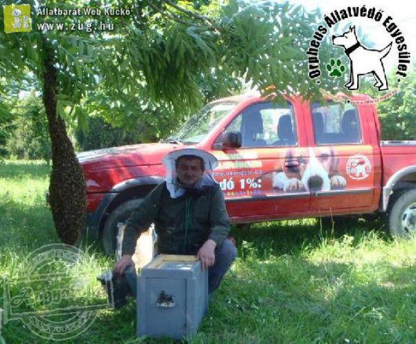 Óriási méhraj okozott pánikot - Méhek támadását hárította el az Orpheus Állatvédő Egyesület