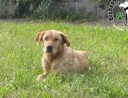 Száz kilométerre elkóborolt kutyust juttatott haza az Orpheus Állatvédő Egyesület