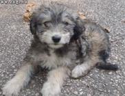 Út szélére dobott kiscicát és kuka mögé bújt kutyusokat mentett az Orpheus Állatvédő Egyesület