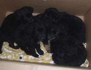 Panelházak közé kidobott kiskutyákat mentett az Orpheus Állatvédő Egyesület
