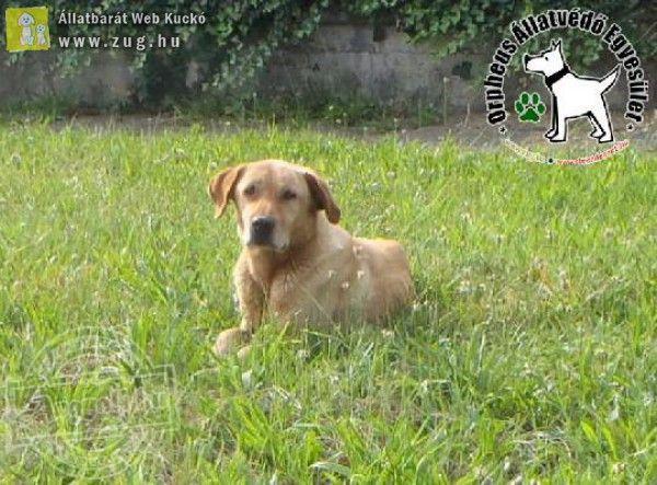 100 kilométert kóborolt az Orpheus Állatvédő Egyesület által megmentett kutyus