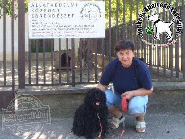 Állatmentés: Pollit az Orpheus Állatvédő Egyesület az utcáról mentette meg és juttatta Szerető Gazdihoz