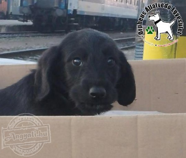 Kuyamentés támogatása - Orpheus Állatvédő Egyesület