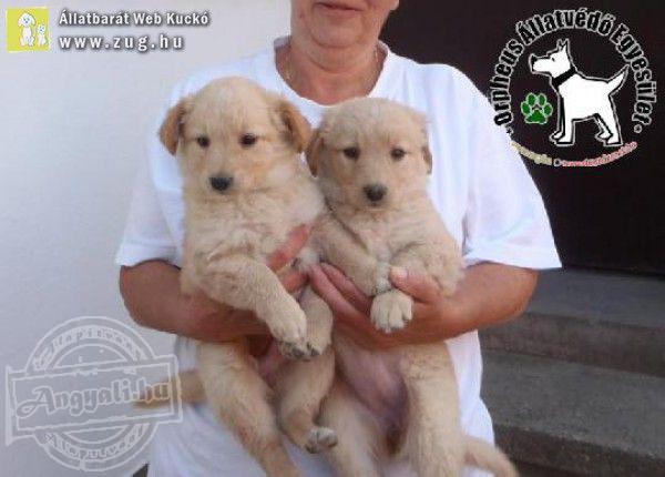 Magára hagyott kutyatestvéreket mentett meg az Orpheus Állatvédő Egyesület