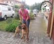 Állatvédelem: Sára az Orpheus Állatvédő Egyesületnek köszönhetően került biztonságba és jutott haza