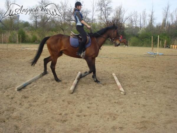 Szegedi Szabadidő Lovasklub - Sport, mozgás