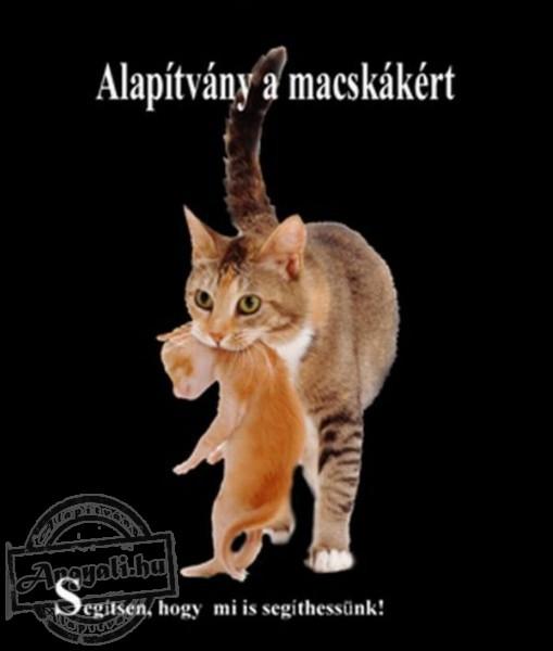 Alapítvány a macskákért - Állatvédelem, macskamentés