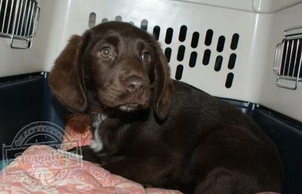 Lőrinci Kutyahűség Állatmentő Közhasznú Alapítvány - Állatmentés, állatvédelem