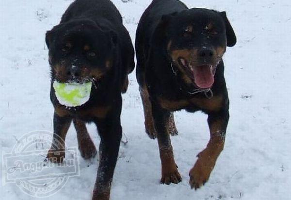Pet Állat- és Környezetvédelmi Egyesület - Állatvédelem, környezetvédelem