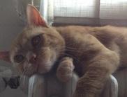 Macskavilág Alapítvány - Állatvédelem, macskamentés