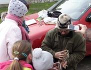 Gyöngybagolyvédelmi Alapítvány - Állatvédelem