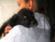 Emberek Az Állatokért Alapítvány - Állatvédelem, állatmentés