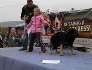 Misina Természet- és Állatvédő Egyesület - Állatvédelem, állatmentés, természetvédelem