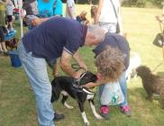 Kutyatár Természet- és Állatvédő Egyesület - Állatvédelem