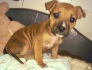 Mentőöv Állatvédő Egyesület - Állatvédelem