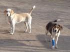Hajdúszoboszlói Kutyabarátok Egyesület - Állatmentés, állatvédelem