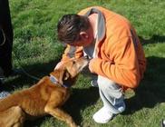 Kéz A Mancsért Civil Állatvédő Egyesület - Állatmentés, állatvédelem