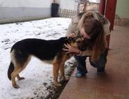 Állatmentő Szolgálat Alapítvány - Állatmentés, állatvédelem
