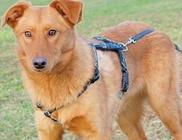 Ebsegély Alapítvány - Állatvédelem, állatmentés