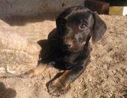 Elek-Ágh Állatmenhely Alapítvány - Állatmentés, állatvédelem