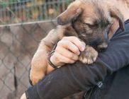 Szentendrei Árvácska Állatvédő Egyesület - Állatvédelem, állatmentés