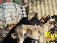 Állatokat Védjük Együtt Alapítvány - Állatvédelem, állatmentés