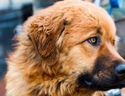 Siófoki Állatvédő Alapítvány - Állatvédelem, állatmentés
