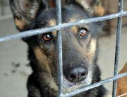Rex Komáromi Állatvédő Egyesület - Állatvédelem, állatmentés