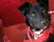 Mancs-Rancs Alapítvány - Állatvédelem, állatmentés