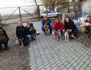Állatmenhely Nyílt Alapítvány - Állatmentés, állatvédelem