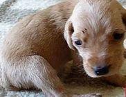 Vackoló Közhasznú Állatvédő Egyesület - Állatvédelem, állatmentés