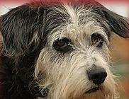 Lelenc Kutyamentő Egyesület - Állatvédelem, állatmentés