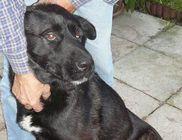 Pilis-Budai Kutyamentők Közhasznú Egyesülete - Állatvédelem, állatmentés