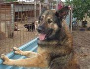 Vácikai Cerberus Alapítvány - Állatvédelem, állatmentés