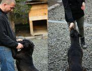Canispro Hungary Állatvédő Alapítvány - Állatmentés, állatvédelem