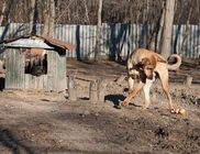 Szent Ferenc Állatotthon Alapítvány - Állatmentés, állatvédelem