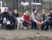Árvácska Állatbarát Közhasznú Egyesület - Állatvédelem, állatmentés