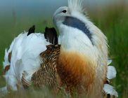 Magyar Madártani és Természetvédelmi Egyesület - Madarak védelme, természetvédelem