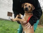 Alpha Segítő Kéz Állatkórházi Alapítvány - Állatvédelem, állatmentés