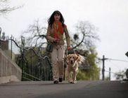 Baráthegyi Vakvezető és Segítő Kutya Iskola Alapítvány - Vakvezető kutyák kiképzése, gazdához juttatása
