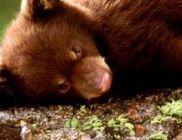 WWF Világ Természeti Alap Magyarország Alapítvány - Természetvédelem