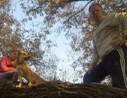 Pápai Humán Állatvédő Egyesület - Állatmentés, állatvédelem