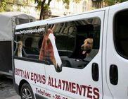Bottyán Equus Hungária Közhasznú Alapítvány - Állatvédelem, lovak mentése