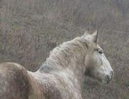 Zakuszka-tanya Alapítvány - Állatvédelem, állatmentés