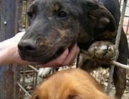 PHILIP Természet- és Állatvédő Egyesület - Állatvédelem, természetvédelem