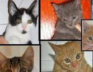 Macskamentők Alapítvány - Állatvédelem, macskamentés