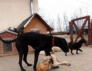 Kóborka Állatvédő Egyesület - Állatvédelem, állatmentés