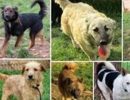 Pacsi Kutyamenhely Alapítvány - Állatvédelem, állatmentés