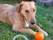 Füzesabonyi Állatvédő Alapítvány - Állatvédelem, állatmentés