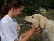 Pomázi Állatvédő és Állatsegítő Egyesület - Állatvédelem, állatmentés, szemléletformálás